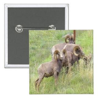 Big Horn Sheep Feeding Button