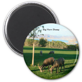 Big Horn Sheep grazing at Lake Mead, Big Horn S... 6 Cm Round Magnet