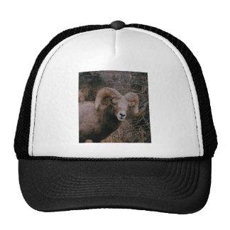 Big Horn Sheep Hats