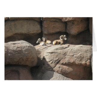 Big Horn Sheep in Arizona Card