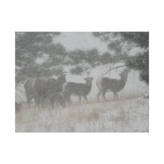 Big Horn Sheep in the Snowstorm Stretched Canvas Print