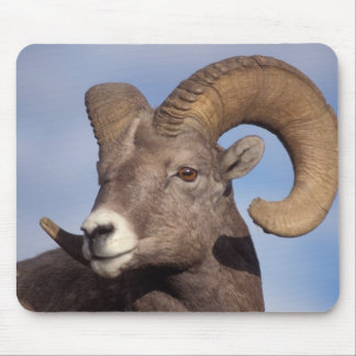 big horn sheep, mountain sheep, Ovis canadensis, Mouse Pad