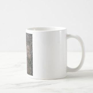 Big Horn Sheep Coffee Mugs
