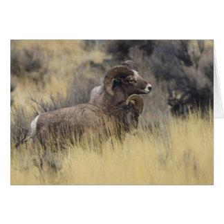 Big Horn Sheep, Wyoming Card