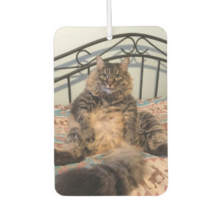 Big Huggable Cat Car Air Freshener