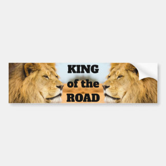 Big lion looking far away bumper sticker