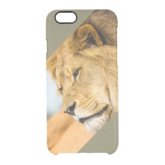 Big lion looking far away clear iPhone 6/6S case
