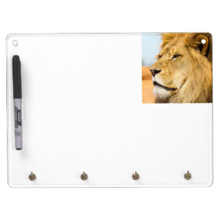 Big lion looking far away dry erase board with key ring holder