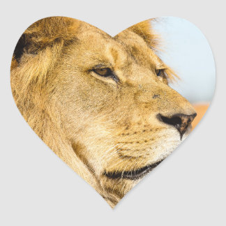 Big lion looking far away heart sticker
