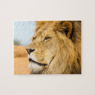 Big lion looking far away jigsaw puzzle
