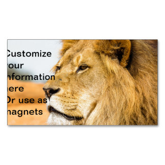 Big lion looking far away Magnetic business card