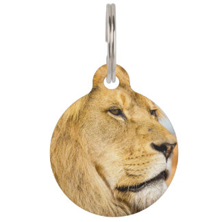 Big lion looking far away pet name tag