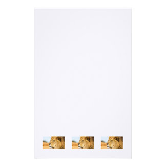 Big lion looking far away stationery