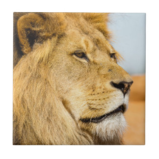 Big lion looking far away tile