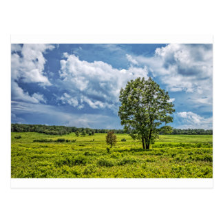 Big Meadows Postcard