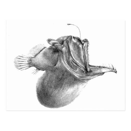 Big mouth gulper angler fish pencil drawing post cards