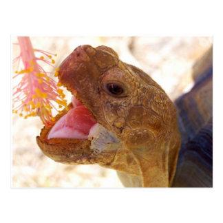 Big Mouth Turtle Postcard