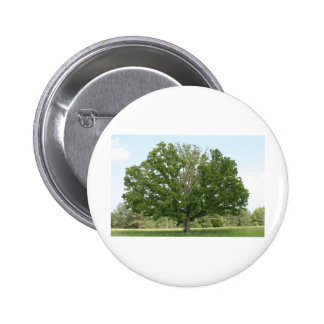 Big old tree pinback buttons