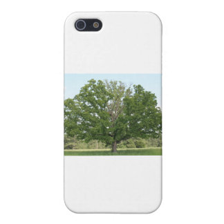 Big old tree iPhone 5 case