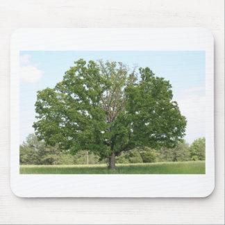 Big old tree mousepad