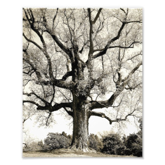 Big Old Tree Photo Print