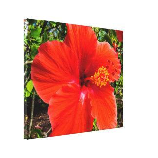 Big Orange/Red Hibiscus Macro Canvas Print