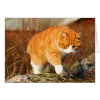 Big Orange Tom Cat on the Prowl Card