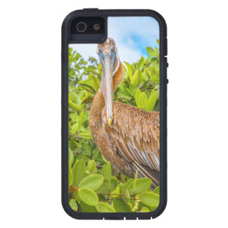 Big Pelican at Tree, Galapagos, Ecuador Case For The iPhone 5