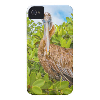 Big Pelican at Tree, Galapagos, Ecuador Case-Mate iPhone 4 Cases