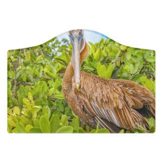 Big Pelican at Tree, Galapagos, Ecuador Door Sign