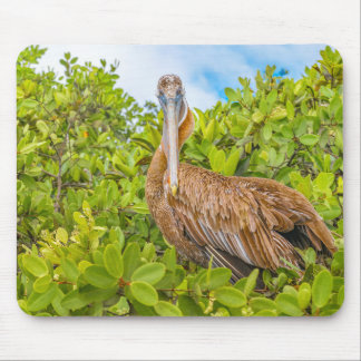 Big Pelican at Tree, Galapagos, Ecuador Mouse Pad
