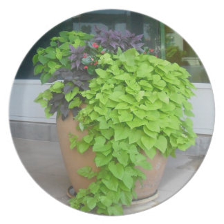 Big Potted Plant Plate
