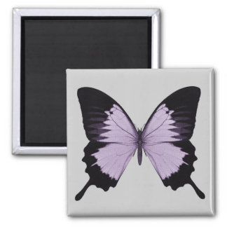 Big Purple & Black Butterfly Magnets