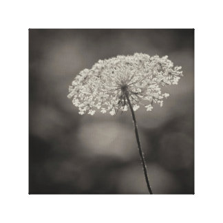Big Queen Anne's Lace Flower Soft Background Sepia Canvas Print
