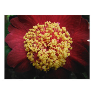 big red and yellow photo print