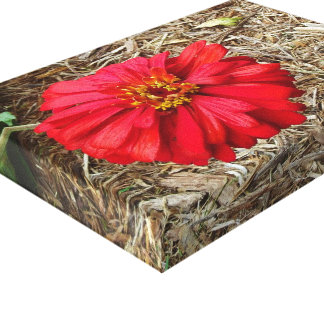 Big Red Flower Canvas Stretched Canvas Print