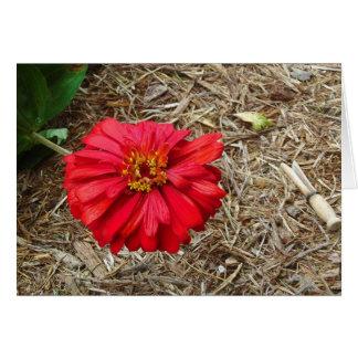 Big Red Flower Card