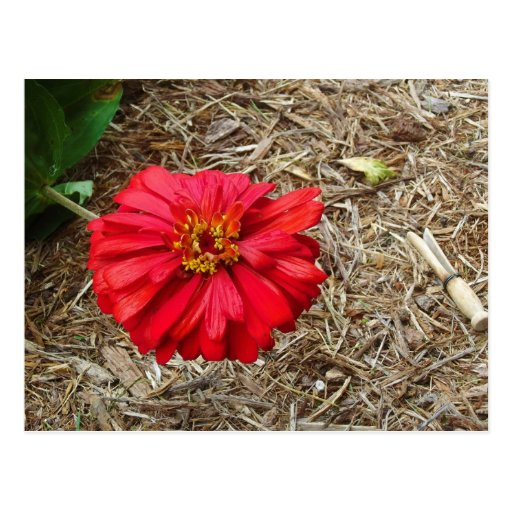 Big Red Flower Postcard