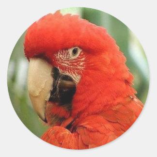 Big Red Parrot Round Sticker