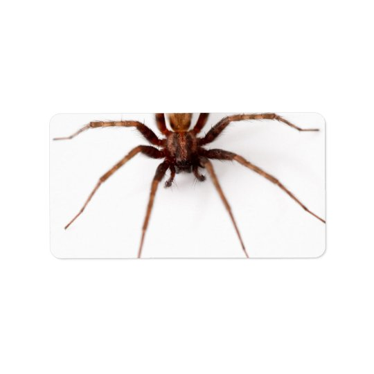 Big Scary Spider Label
