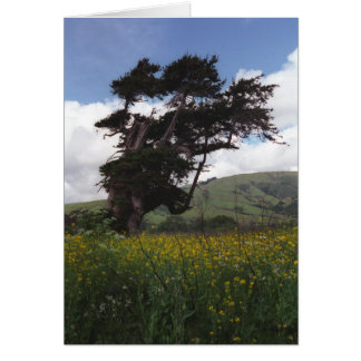Big Sur tree card