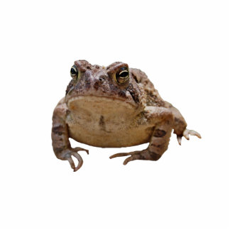 Big Toad Photo Sculpture Badge