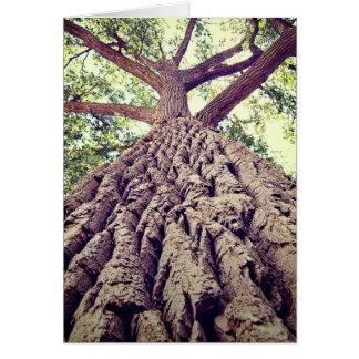 Big Tree Bark Greeting Card