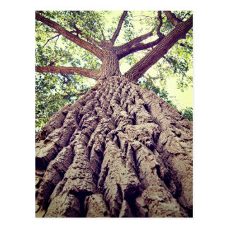 Big Tree Bark Postcard