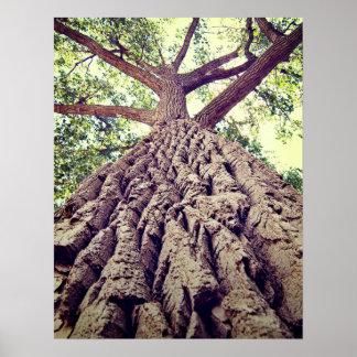Big Tree Bark Poster