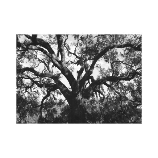 Big Tree Gallery Wrapped Canvas