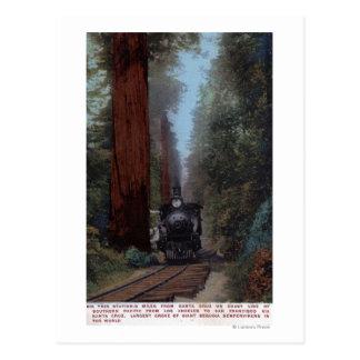 Big Tree Railroad Station Post Cards