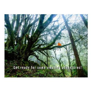 Big Trees Amazing Adventure Teacher Note Postcard