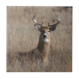 Big Trophy Buck Deer in Tall Grass Camo Ceramic Tile