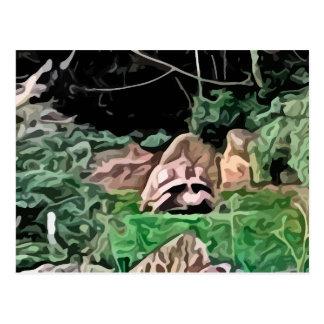 big turtle painting postcard